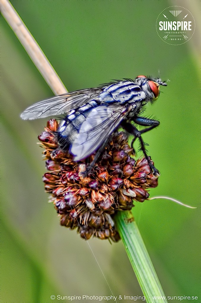 Horsefly closeup...