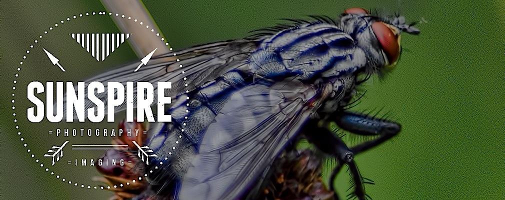 Sunspire Photography & Imaging - Nature Photos