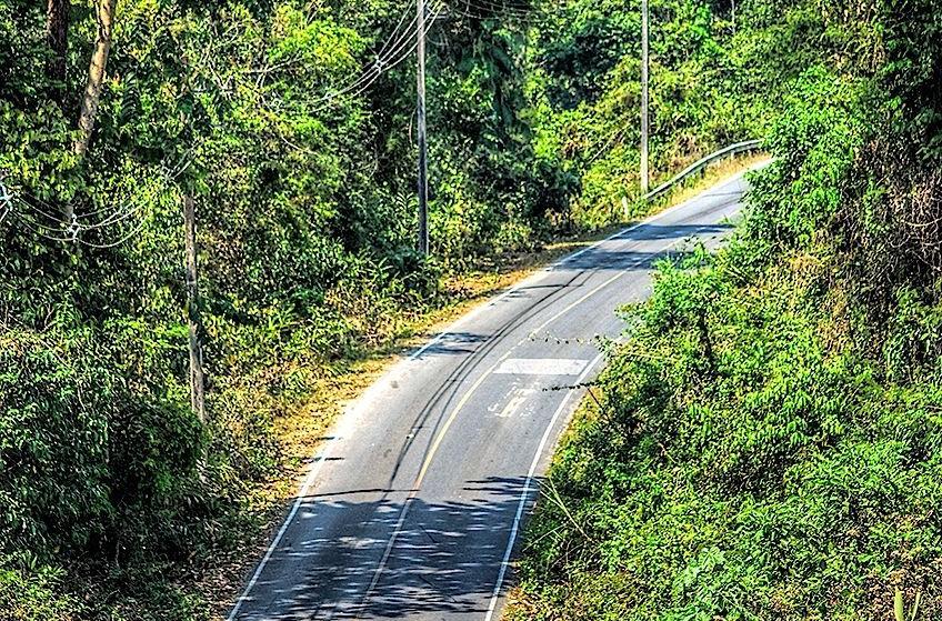Road at Khao Yai National Park...