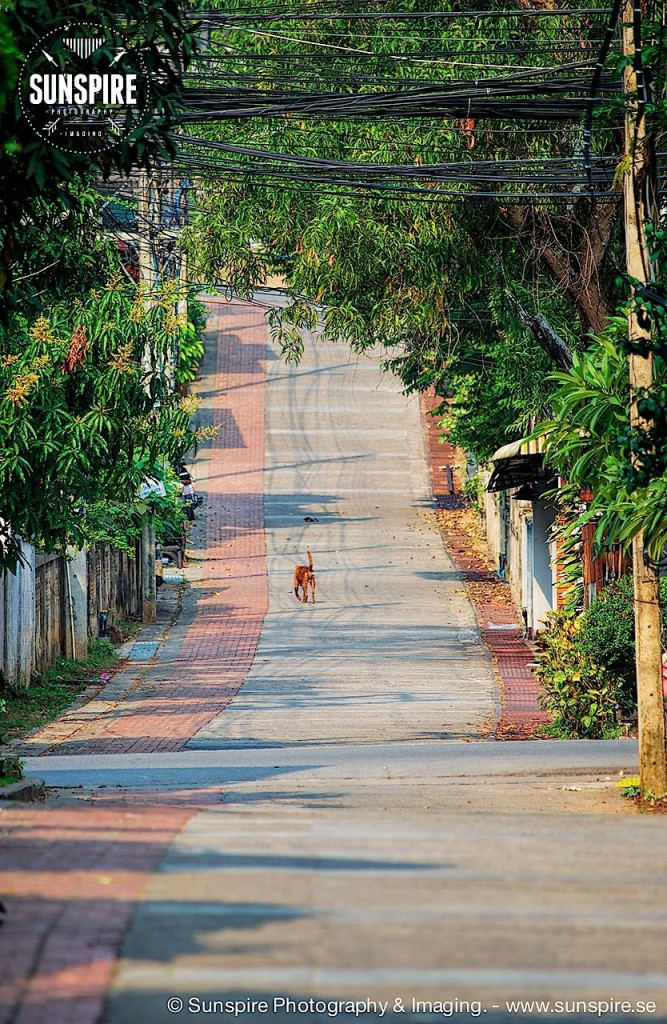 A lonely dog on the streets of Mae Hong Son, Thailand....