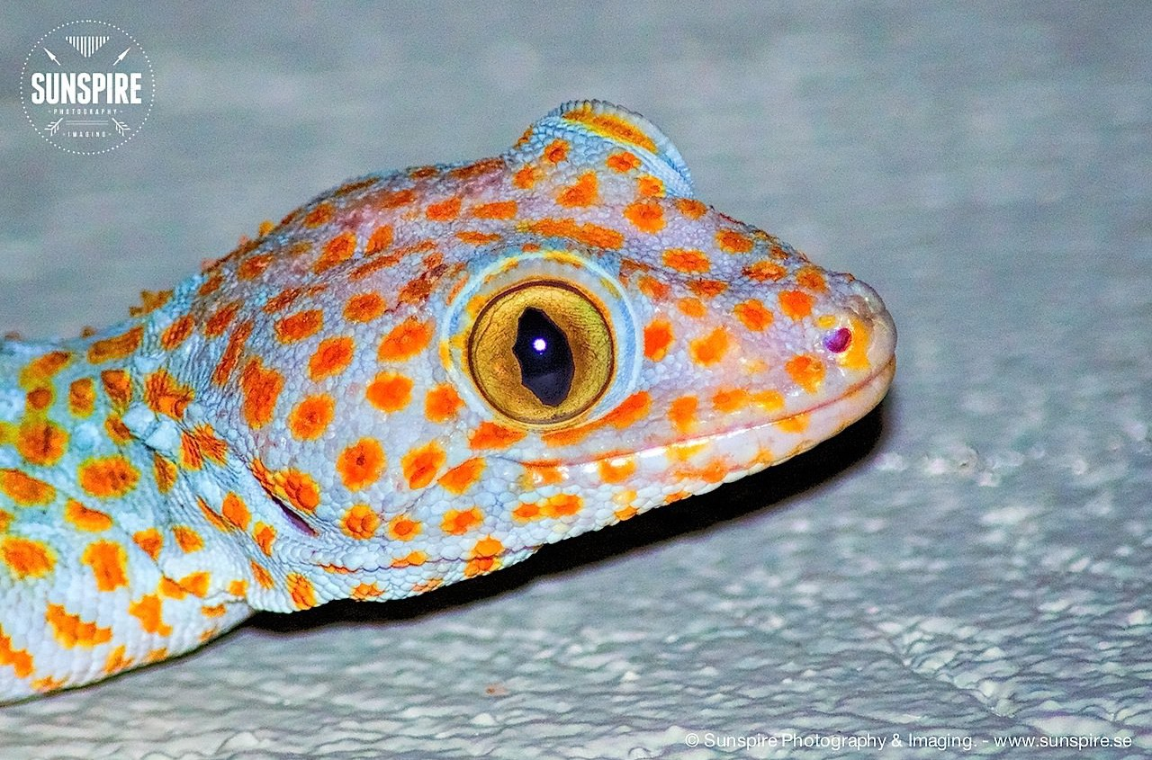 Hello! Mr. Gecko...